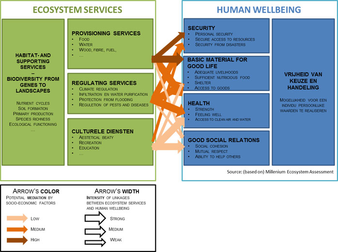 Figure 1 Ecosystem services link ecosystems to human well-being. Based on MA 2005.