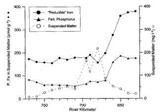 Fig. 3 Relationship of particulate phosphorus and Fe-oxyhydroxides, together with the salinity profile for the Elbe during a March sampling in 1995 (van Beusekom & Brockmann 1998)