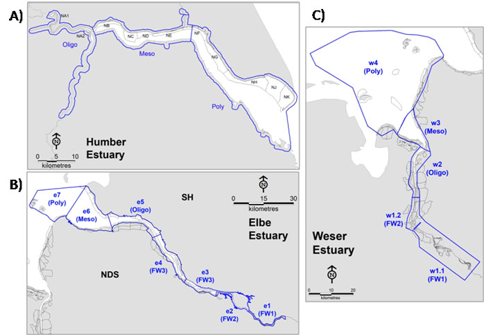 Figure 1.  Counting units/sectors in the Humber (A), Elbe (B) and Weser (C) estuaries (in grey).  Estuarine zones, as per TIDE zonation and salinity zonation (as derived from the Zonation of the TIDE estuaries ) are indicated in blue (sector names are also indicated for the Humber Estuary, freshwater zones in this estuary are not shown as no bird data were available in them).